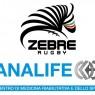 analife_zebre